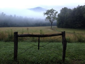 Foggy meadow in the Smoky Mountains